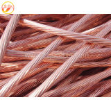 XLPE와 PVC Insulation Power Cable의 각종 Types