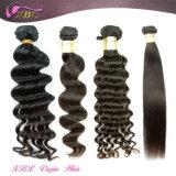 加工されていない人間の毛髪の拡張ねじれた巻き毛の卸し売りバージンのモンゴル人の毛