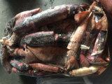 100-300 calamar congelado do calamar do grama refeição preta para a venda