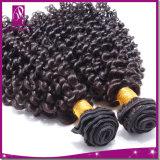 黒人女性の毛のもつれの自由な組みひもの毛