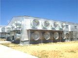 Moderne Art-vorfabriziertes Stahlkonstruktion-Huhn-Haus (KXD-PCH3)
