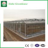 Serre chaude en verre galvanisée à chaud pour des légumes/fleurs