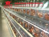 Acier, matériau d'acier inoxydable et oeuf automatique rassemblant le type matériel de machine de ferme avicole d'oeufs de poulet
