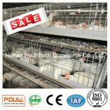 Cage de poulet de viande avec le système d'approvisionnement en eau automatique