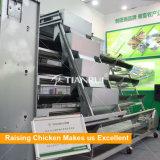 Matériel automatique de vente chaud de couche de poulet d'oeufs de cage de poulet