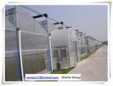 Het Groene Huis van de Film van de Fabriek van China Hydroponic voor Tomaat