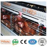 Grande capacité de matériel de volaille une cage de ferme de poulet de batterie
