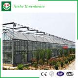 Serre chaude en verre d'envergure multi d'agriculture pour la plantation