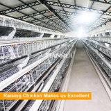 방글라데시 H 유형 층 가금 감금소 장비에서 최신 판매