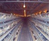 Cage de poulet d'éleveur avec le système automatique de matériel à vendre (un type bâti)