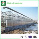 Tipo estufa de vidro de China Venlo para Growing do vegetal e de flores
