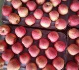 Neues Getreide chinesischer frischer FUJI Apple