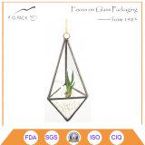 Décoration en verre de Terrarium de seul planteur géométrique fabriqué à la main d'air