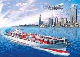 Logistica Service From Ningbo ad Amburgo dell'America