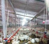 Exploração agrícola Prefab barata da casa de galinha da construção de aço