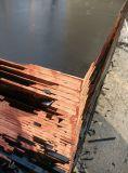 [18مّ] بحريّة خشب رقائقيّ حور لب إصبع مفصل فلق درجة لأنّ أبنية