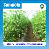 販売のための農業のトマトの温室