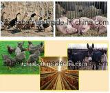 小さい自動家禽の飼料工場