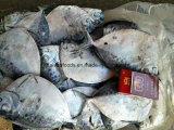 Chinesische gefrorene Moonfish-Fabrik