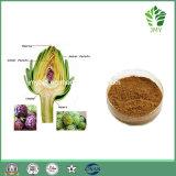 Extrait chinois 5%, 10% d'artichaut de phytothérapie d'approvisionnement d'usine