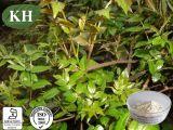 No выдержки Dihydromyricetin/CAS чая лозы высокой очищенности: 27200-12-0