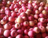 Goldenes Supplier von Fresh Red FUJI Apple Counts 100-113-125
