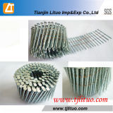 Twisted Shank Pintado ou Polido Coil Nail for Pallet
