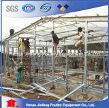 Machines de ferme pour la cage de poulet/cage de couche pour Africia