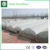 Serra agricola della pellicola del pomodoro della Cina da vendere