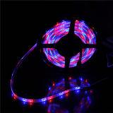 Il natale decora la striscia flessibile della corda 3528 LED dell'indicatore luminoso di bordo LED