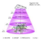 ينمو [لد] شعبيّة ضوء, داخليّة ينمو ضوء, تجويف صغير عادية [لد] ينمو ضوء