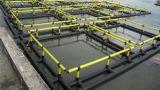 Cage de flottement carrée de pisciculture en mer profonde