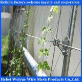 Sistema inoxidável do cabo entrançado de aço para a planta verde