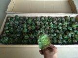 Plantas artificiales superventas de Gu20170305113541 suculento
