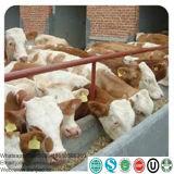 Pflanzenfett-Puder mit dem Protein vorgemischt für Baby-Tier Milch-Stellvertreter