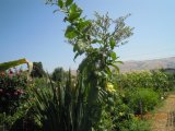 Het Veredelingsmiddel van de Grond van Unigrow bij het Planten van de Tabak wordt behandeld die