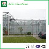 Vegetais/jardim/flores/casa verde de vidro da exploração agrícola para a agricultura