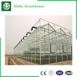 Vegetais/jardim/flores/casa verde de vidro da exploração agrícola para tomates