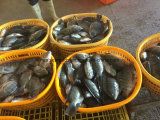 Chinese Bevroren Zwarte Tilapia Fabriek