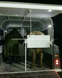 New Economy Straight Horse Float / Trailer do cavalo do fabricante chinês