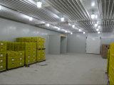 冷蔵室のプロジェクトのスリラー500のトン(LAIAO)