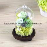 DIY preservó amor eterno fresco verdadero natural de la cubierta de cristal de la flor del 100% Rose