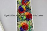 Madre hecha a mano preservada de la flor de las rosas naturales, regalo del día de S