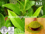Polifenoli 95%, catechina 70%, estratto del tè verde di EGCG 30%