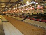 Польностью автоматические Controlled оборудования цыплятины с Prefab сараем цыплятины стальной структуры