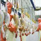 Máquina de la matanza de las aves de corral para la casa de la avicultura