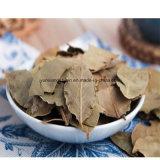 Luft trocknete Bucht-Blätter