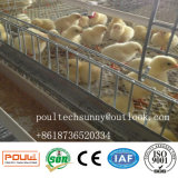 Chaud vendant une cage de ferme avicole de poulet de bâti pour des poulettes