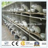 Contenitore della rete metallica/gabbia resistente