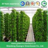 販売のためのQaulityのPEの農業のPolytunnelの高い温室